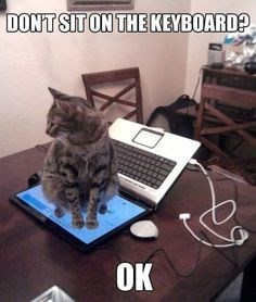 Cat - DONT SIT ON THE KEYBOARD? OK