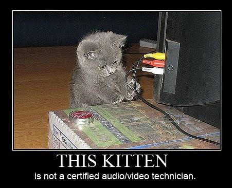 Cat - ΤHIS KΙTTEN is not a certified audio/video technician.