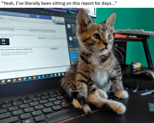 """Cat - """"Yeah, I've literally been sitting on this report for days..."""" STP y dened nn FI2 Key Comnato can th A"""