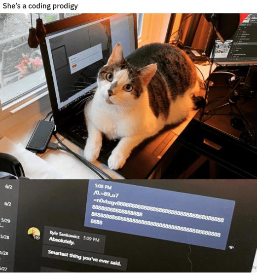 Cat - She's a coding prodigy 5.08 PM /0.-89.u7 =novbzgv68 888888888 8888888 8888 6/2 8888 6/2 888 5/29 Kyle Sankowicz 509 PM Absolutely. 5/28 Smartest thing you've ever said. 5/28 27