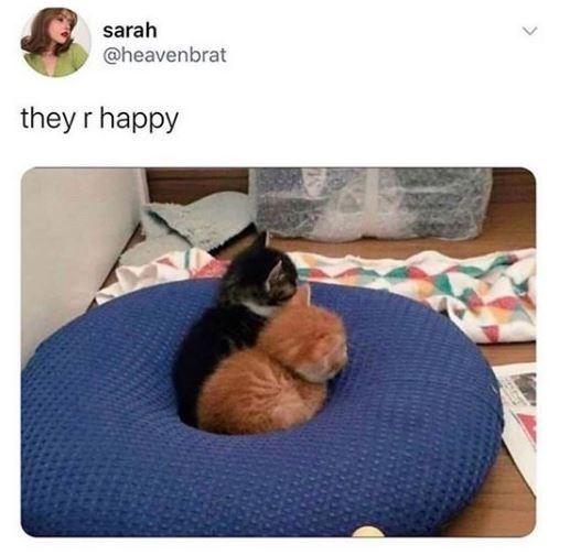 Companion dog - sarah @heavenbrat they r happy >