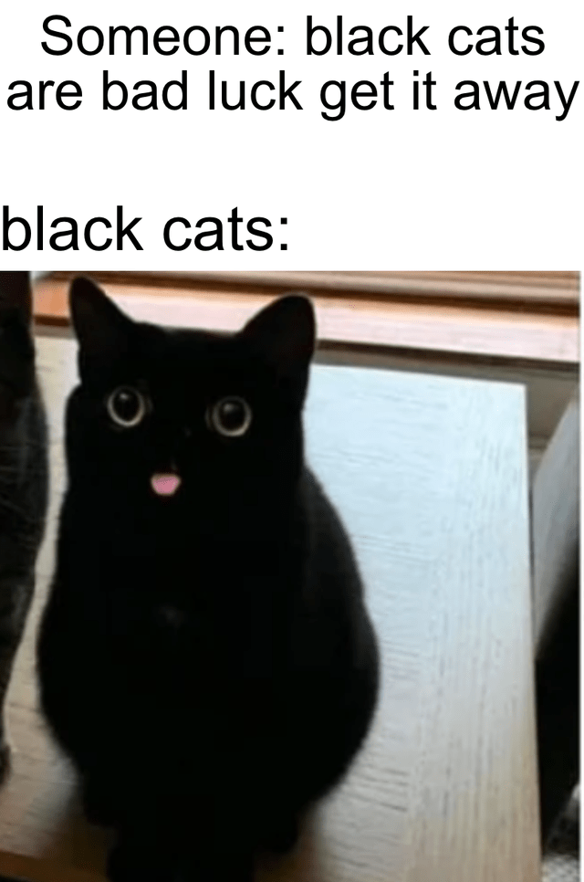Cat - Someone: black cats are bad luck get it away black cats: