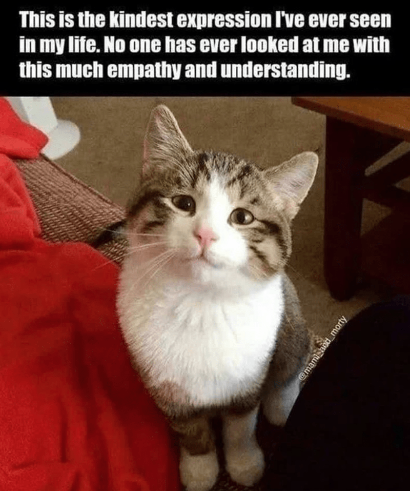 Cat - This is the kindest expression l've ever seen in my life. No one has ever looked at me with this much empathy and understanding. @mami and morty