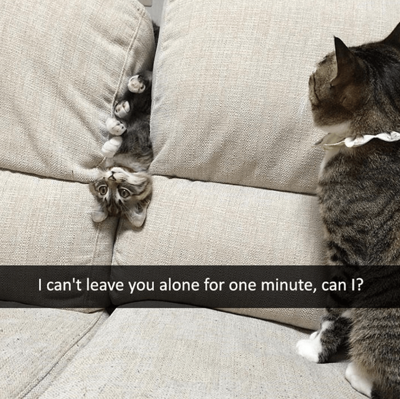 Cat - I can't leave you alone for one minute, can I?
