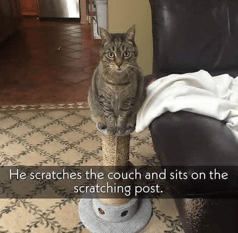 Cat - He scratches the couch and sits on the scratching post.