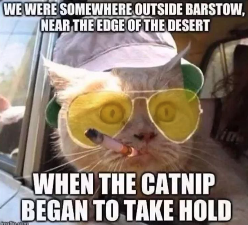 Photo caption - WE WERE SOMEWHERE OUTSIDE BARSTOW, NEAR THE EDGE OF THE DESERT WHEN THE CATNIP BEGAN TO TAKE HOLD mafio.com