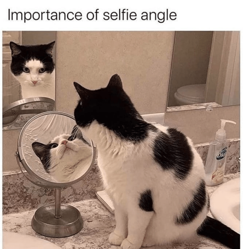 Cat - Importance of selfie angle Dio
