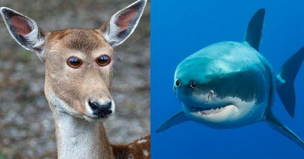 eyes photoshop funny weird animals - 953349