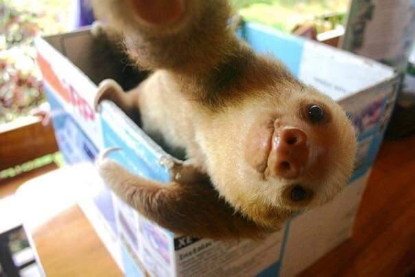 Sloth - EXE