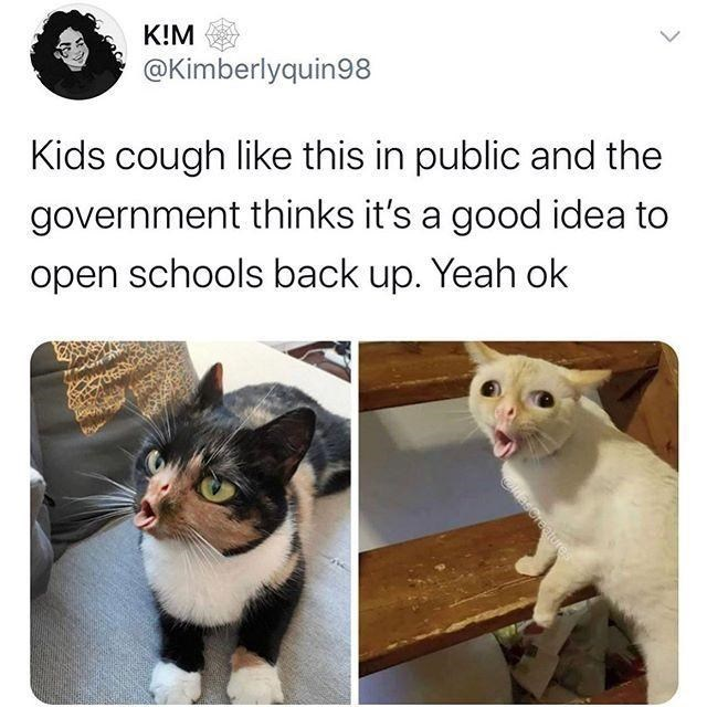 """Funny Twitter meme that reads, """"Kids cough like this in public and the government thinks it's a good idea to open schools back up. Yeah ok"""" above photoshopped images of two cats coughing"""
