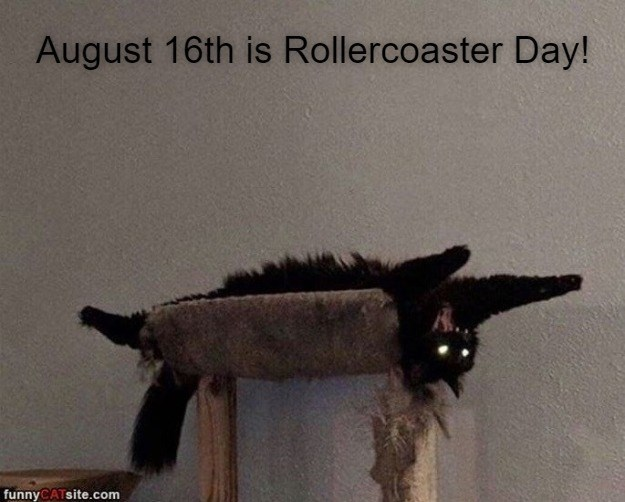 August 16th is Rollercoaster Day! funny CAT site.com funny black cat lying on its back