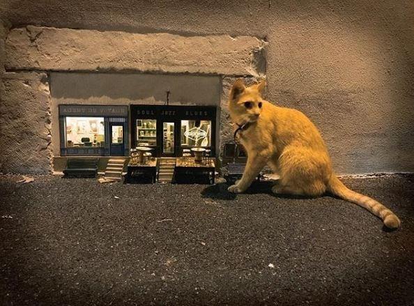 Street dog - SOUL ELUES CAL