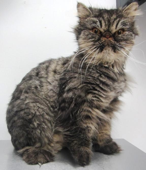 angry looking - Cat
