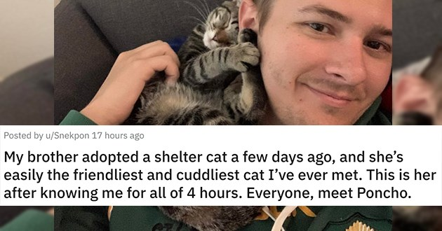 adopt adopted cats dogs