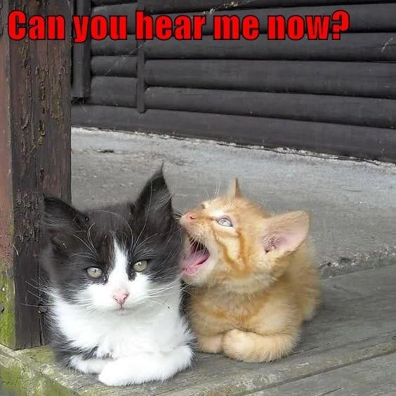 Cat - Can you hear me now?