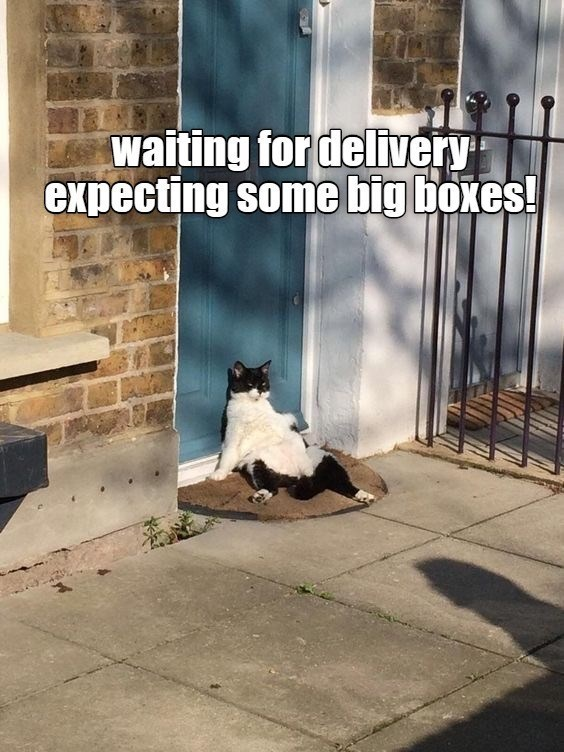 Cat - waiting for delivery expecting some big boxes!