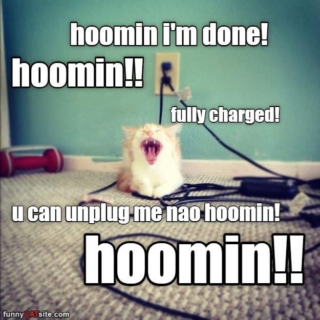 Photo caption - hoomin i'm done! hoomin! fully charged! u can unplug me nao hoomin! hoomin!! funnyCATsite.com