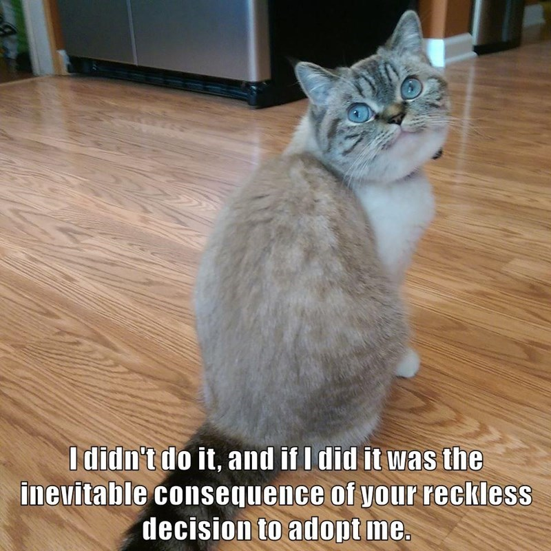 Cat - I didn't do it, and if I did it was the inevitable consequence of your reckless decision to adopt me.