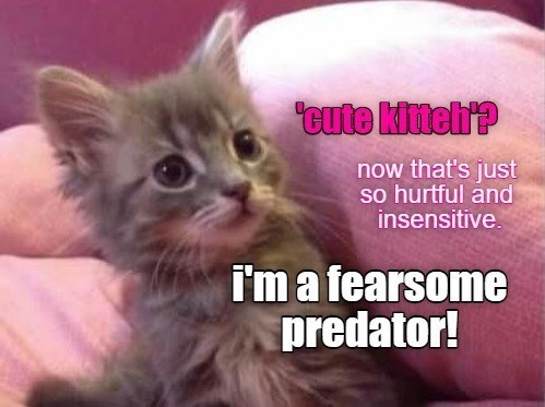 Cat - tute kitehre now that's just so hurtful and insensitive. I'm a fearsome predator!