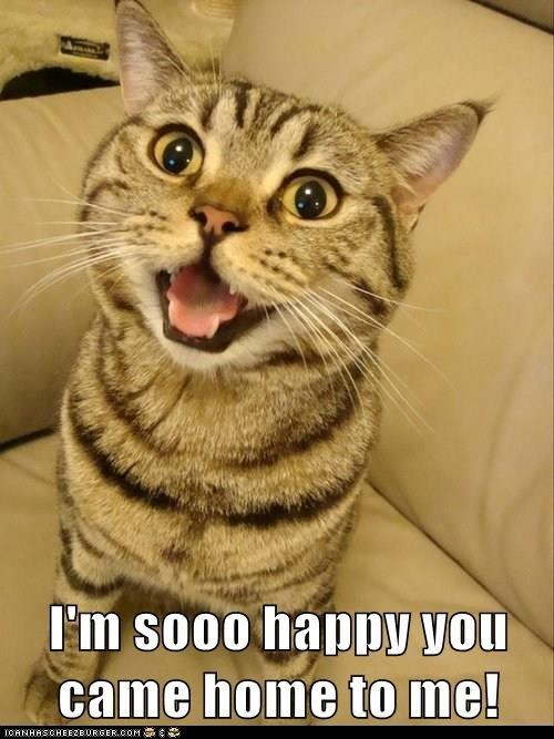 Cat - I'm so0o happy you came home to me! ICANHASCHEEZBURGER.COM G