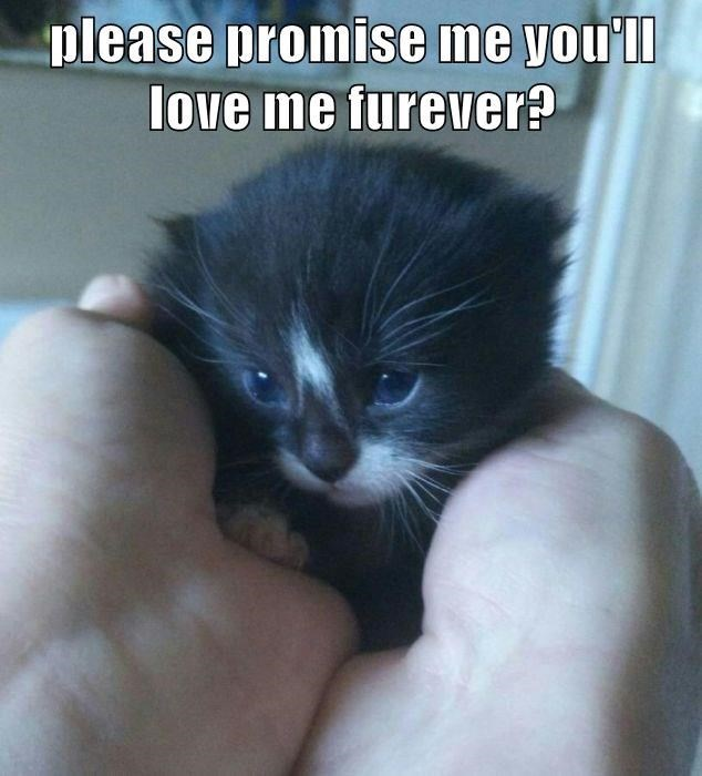 Cat - please promise me you'll love me furever?