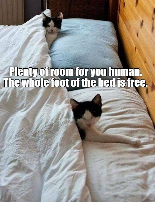 Cat - Plenty of room for you human. The whole foot of the bed is free.