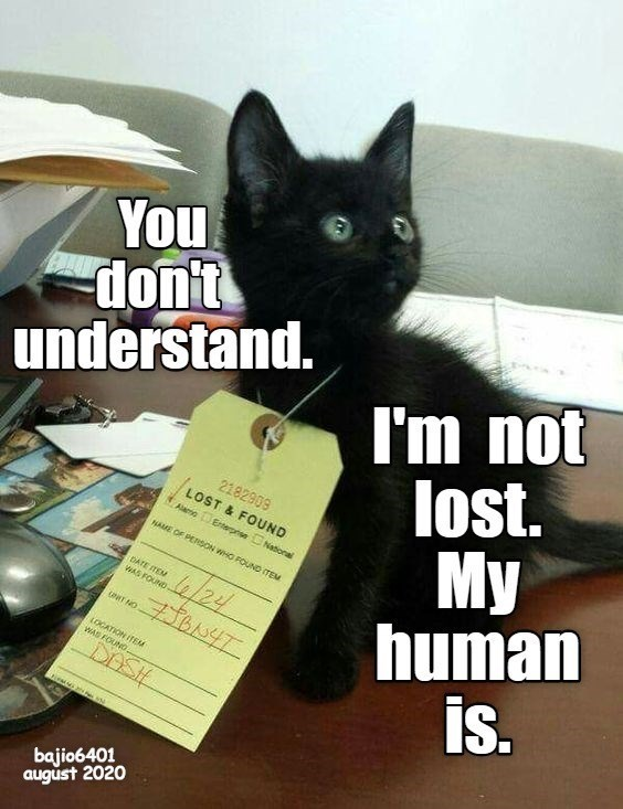 Cat - You don't understand. I'm not lost. My human is. 2182909 LOST & FOUND Alamo Erterpnse National NAME OF PERSON WHO FOUND ITEM DATE TEM WAS FOUND- 4/24 T NO LOCATION ITEM WAS FOUNG DASH bajio6401 august 2020
