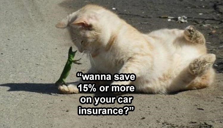 wanna save 15% or more on your car insurance? cat and gecko