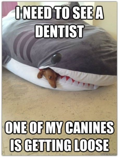 Photo caption - INEED TO SEEA DENTIST ONE OF MY CANINES IS GETTING LOOSE GUmemeom