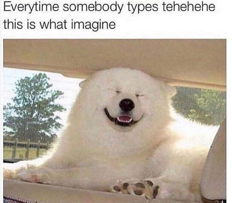 meme of bear dog laughing like those people who type tehehehe in chats