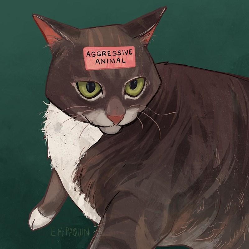 Cat - AGGRESSIVE ANIMAL EM PAQUIN