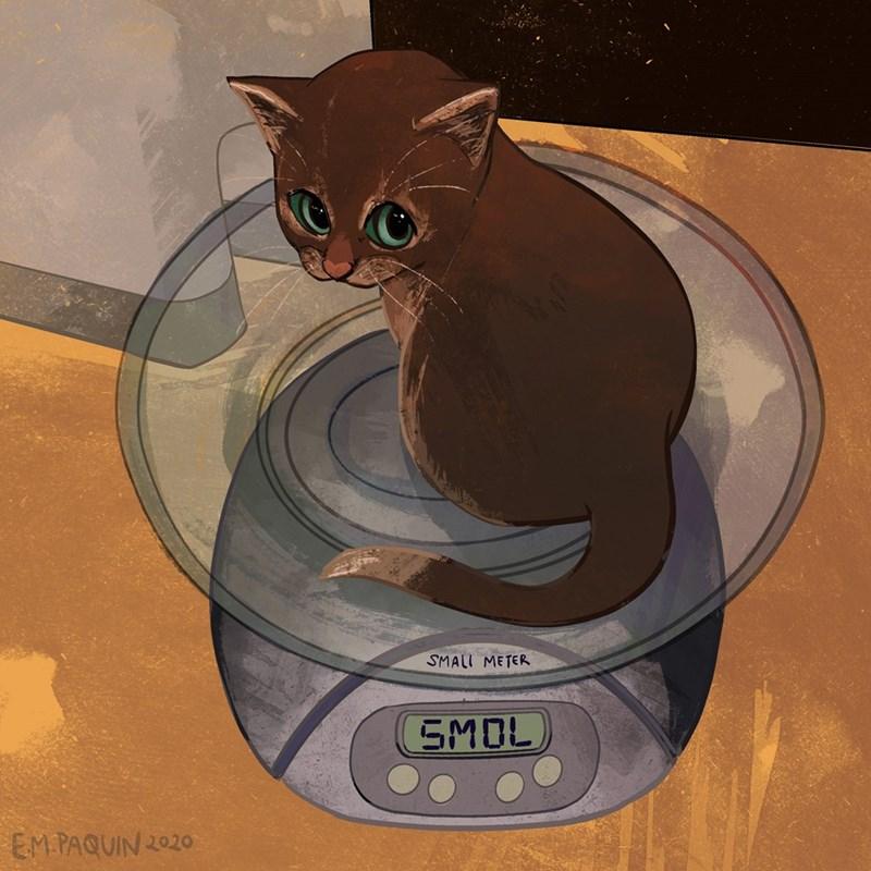 Cat - SMALL METER SMOL EM.PAQUIN 2020