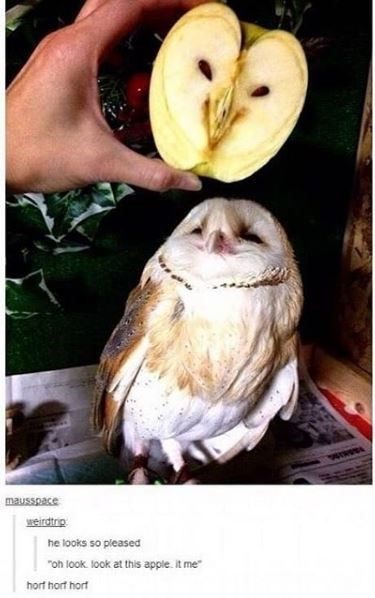 """Bird - mausspace weirdtrip he looks so pleased """"oh look. look at this apple. It me hort hort hort"""