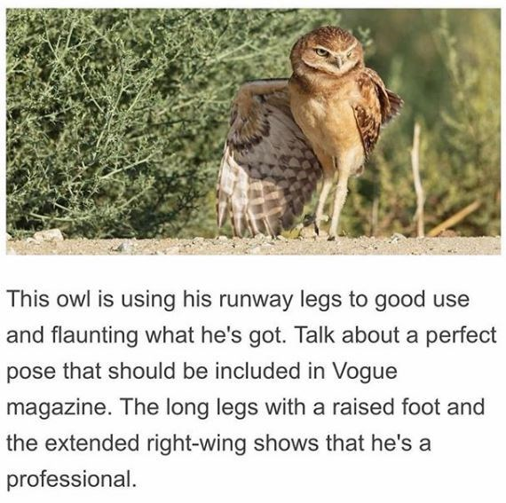 Wildlife - This owl is using his runway legs to good use and flaunting what he's got. Talk about a perfect pose that should be included in Vogue magazine. The long legs with a raised foot and the extended right-wing shows that he's a professional.