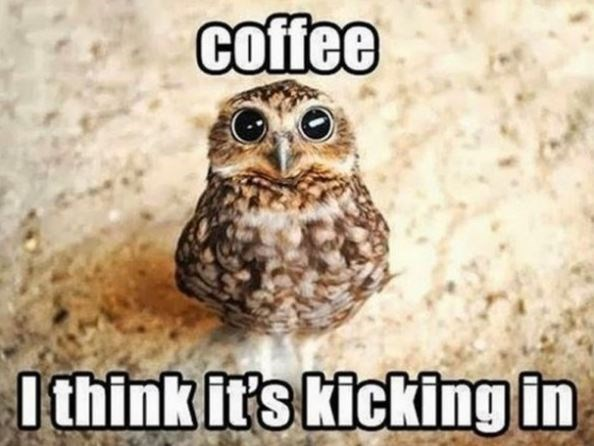Owl - coffee I think it's kicking in