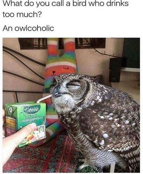 Owl - What do you call a bird who drinks too much? An owlcoholic Multvjamnico