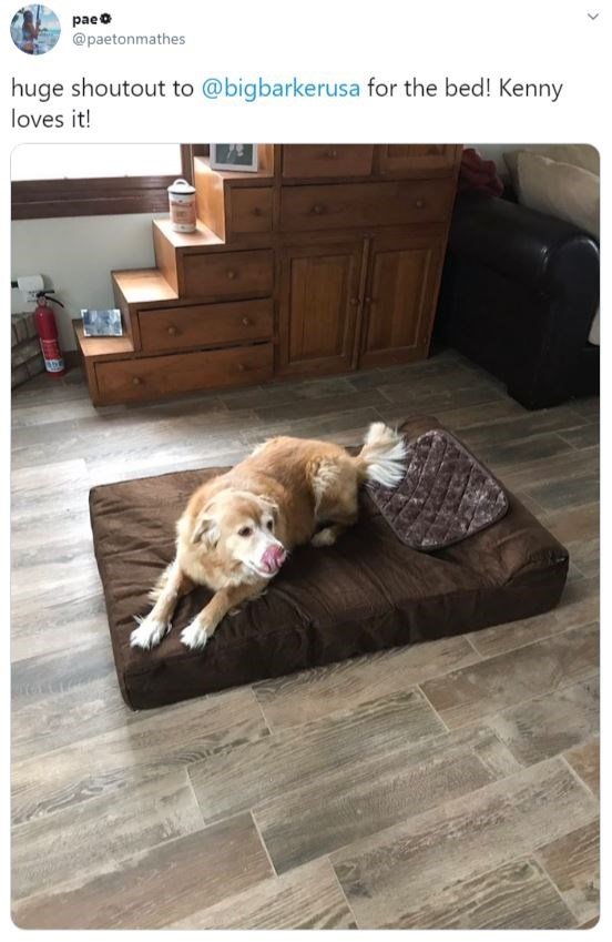 Dog - paeo @paetonmathes huge shoutout to @bigbarkerusa for the bed! Kenny loves it!