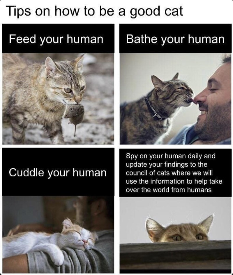 Tips on how to be a good cat Feed your human Cuddle your human Bathe your human Spy on your human daily and update your findings to the council of cats where we will use the information to help take over the world from humans
