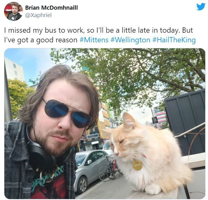 Cat - Brían McDomhnaill @Xaphriel I missed my bus to work, so l'll be a little late in today. But I've got a good reason #Mittens #Wellington #HailTheKing
