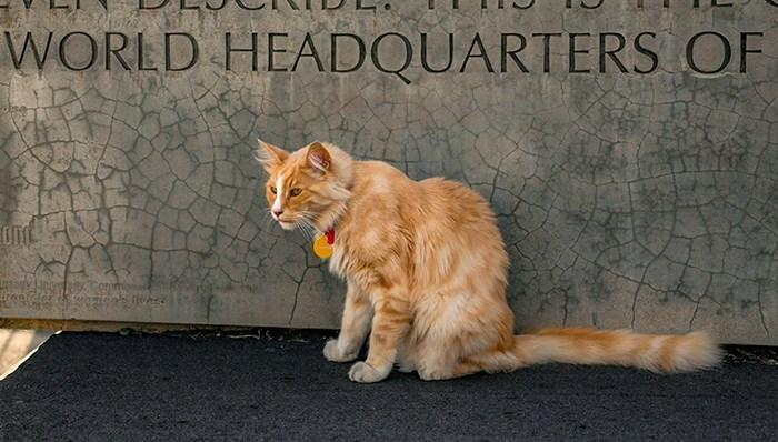 Cat - WORLD HEADQUARTERS OF