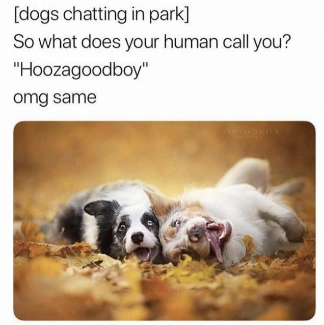 """Canidae - [dogs chatting in park] So what does your human call you? """"Hoozagoodboy"""" omg same ZNYSEOWSKA"""