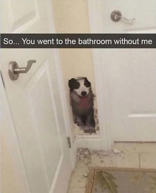 Wall - So... You went to the bathroom without me