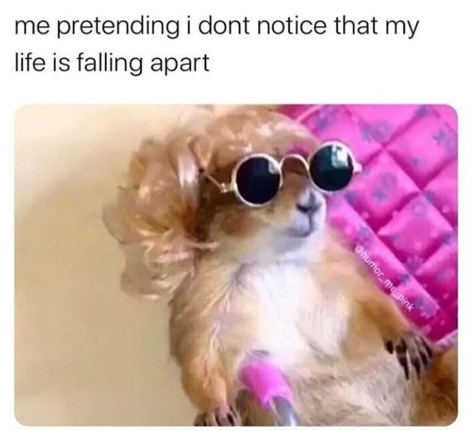 Dog - me pretending i dont notice that my life is falling apart Ohumor_me pink