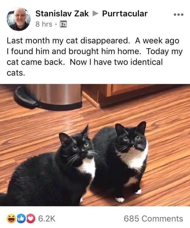 Cat - Stanislav Zak > Purrtacular 8 hrs · A Last month my cat disappeared. A week ago I found him and brought him home. Today my cat came back. Now I have two identical cats. O 6.2K 685 Comments
