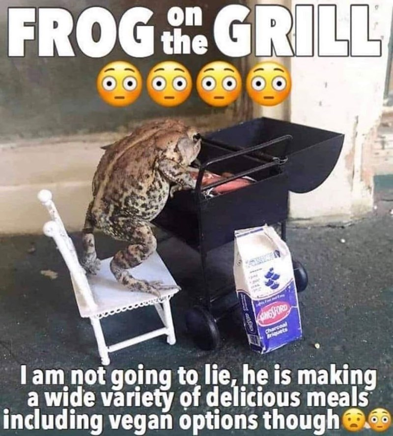 Cat - FROG GRILL on the KNGSFORD Charcoal Briquets Iam not going to lie, he is making a wide văriety of delicious meals including vegan options thoughO