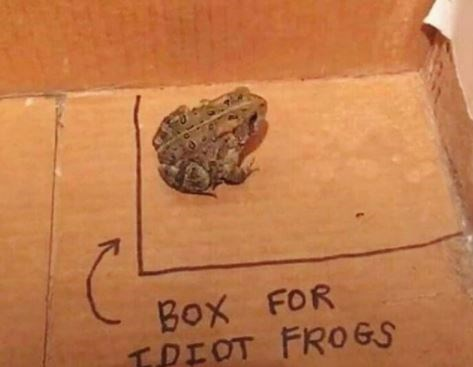 Toad - BOx FOR TPIOT FROGS