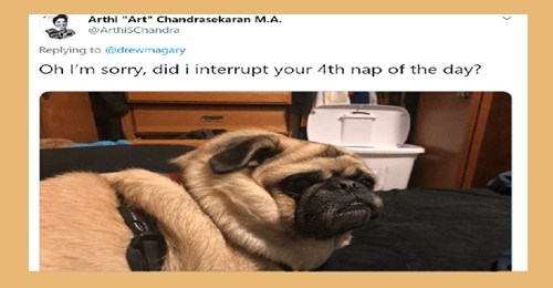 dogs dog tweets funny dogs dog reaction animal tweets dog owners adorable lol funny tweets funny - 9537797