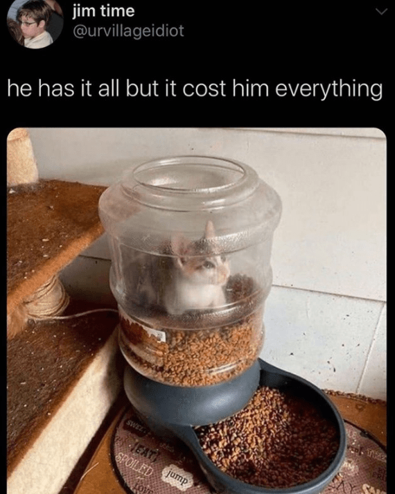 funny meme about cat who is stuck in food dispenser | jim time @urvillageidiot he has it all but it cost him everything