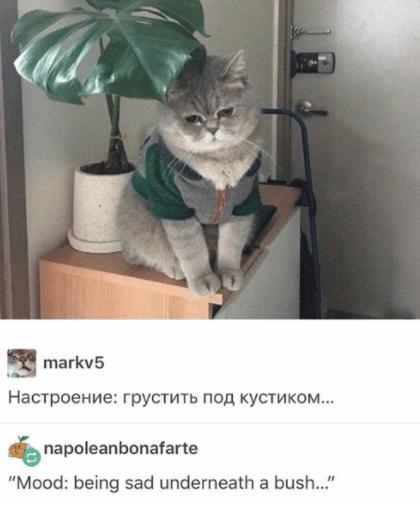 """Cat - markv5 Настроение: грустить под кустико... napoleanbonafarte """"Mood: being sad underneath a bush.."""""""