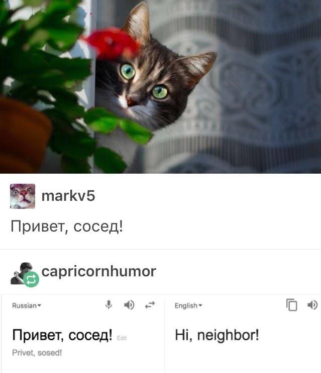 Cat - markv5 Привет, сосед! capricornhumor Russian English- Привет, сосед! Hi, neighbor! Edit Privet, sosed!